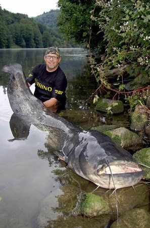 Anglers fished 2.16 meter long catfish from the river Neckar.