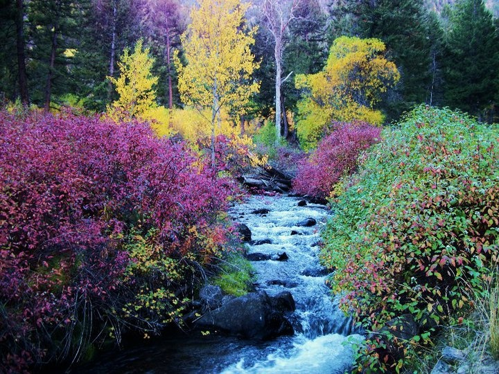 Challis Creek in Central Idaho in Fall colors
