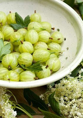 my Mommom had gooseberries growing in the back yard...so good