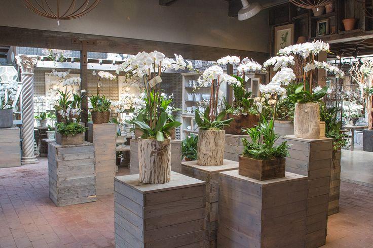 133 Best Indoor Plants Images On Pinterest
