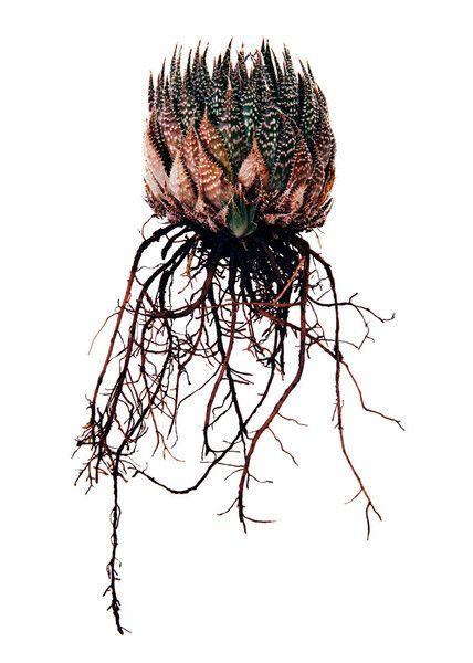 Clinton Friedman, Classic Botanical Plant 2