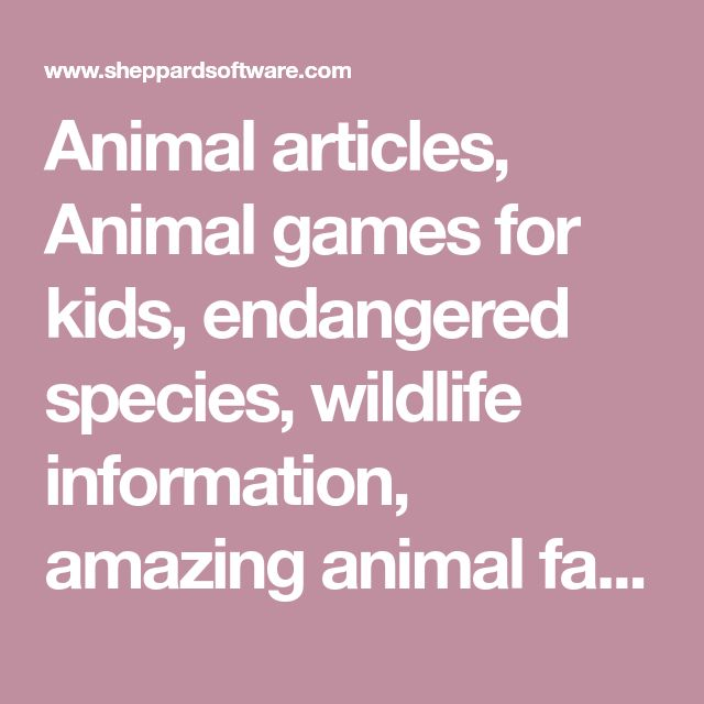 Animal articles, Animal games for kids, endangered species, wildlife information, amazing animal facts, learning games for kids, animal kingdom, animal computer games, dog pets. Cats, monkeys, exotic animals. Snakes, Sharks, Orangutans, Primates, Big Cats, Felines, Canines, Horses, Birds and many more animals. Special topics like endangered animals, evolution, classification and more. #computergames