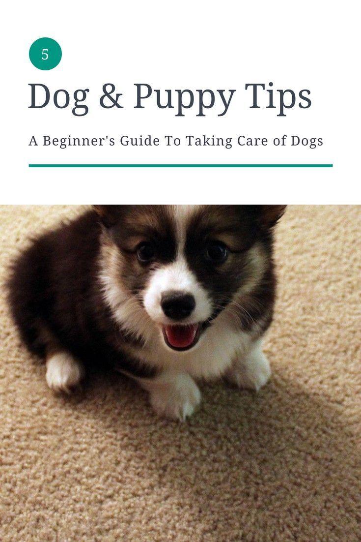 Pin On Puppy Photos