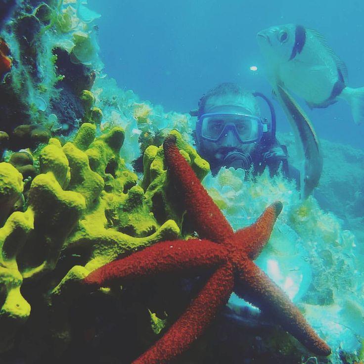 #ayvalik3sea #dalismerkezi #scuba #ayvalik #cunda #ayvalıkdalış #ilyostaadası #denemedalisi #koraygerce #daliskursu #trydive www.ayvalik3sea.com (Ayvalik 3 sea dalış merkezi)