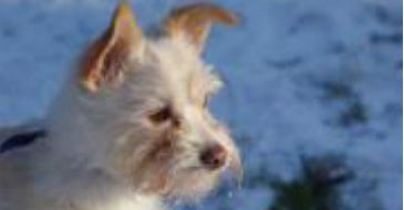 Learn more about Dogway Dog Rescue Society in Mission, BC, and search the available pets they have up for adoption on Petfinder.
