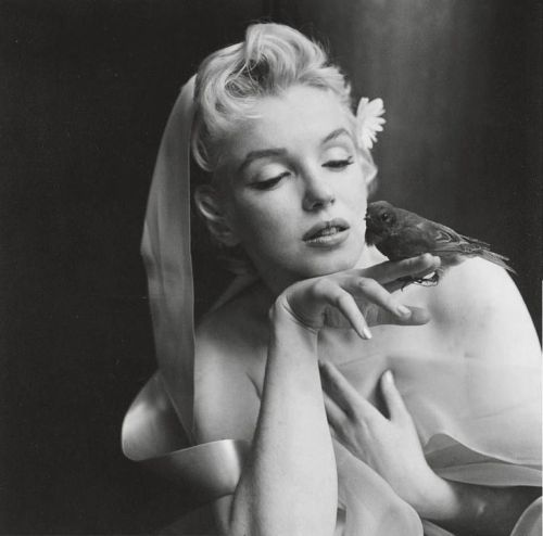 The bird sitting by Cecil Beaton, 1956.