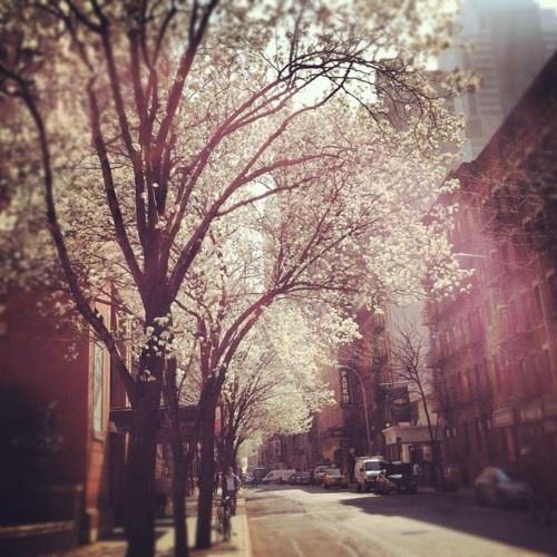 13 best Hell\'s Kitchen, Manhattan images on Pinterest | Hells ...