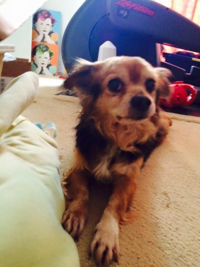Dog Adoption Maryland Dc