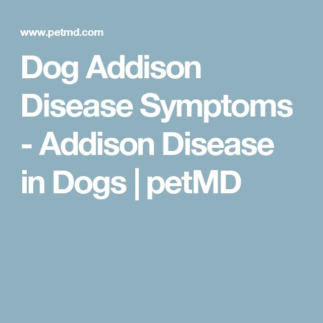 17 best ideas about addison s disease symptoms dog addison disease symptoms addison disease in dogs petmd