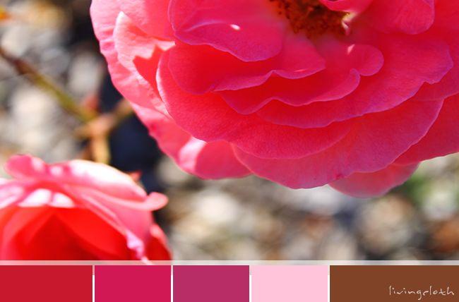 rose pinks via livingcloth.com