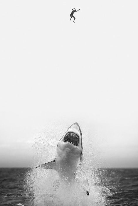 rawrCraft Painting, White Photography, Home Crafts, Landscape Photography, White Sharks, Shark Week, Photography Quote, Sharks 3, Great White Shark