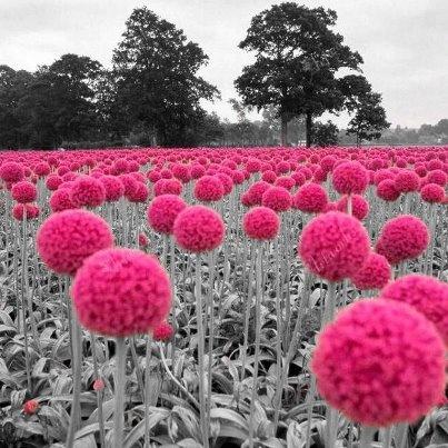 Pink Pop #colourinspiration #pink #nature
