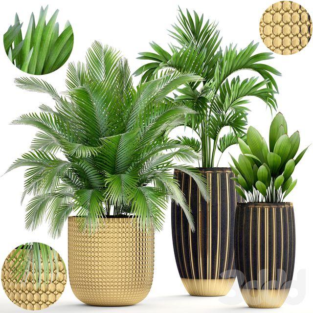 Коллекция растений 188. | Растения