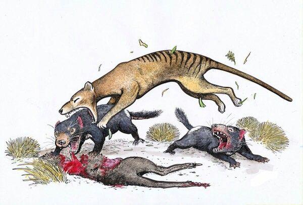 Tasmania Full Documentary Devils & Tigers