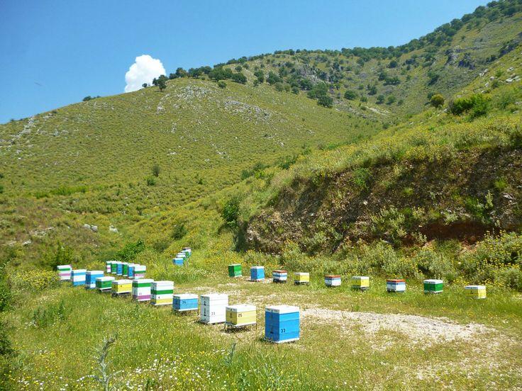 Το μελισσοκομείο ανάμεσα στους ποταμούς Λούρο και Άραχθο στις ανθισμένες πλαγιές του Ξηροβουνίου (Πίνδος).