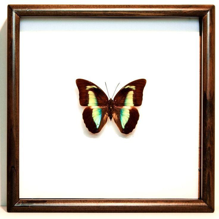 79 best Framed Butterflies images on Pinterest | Butterflies, Frame ...