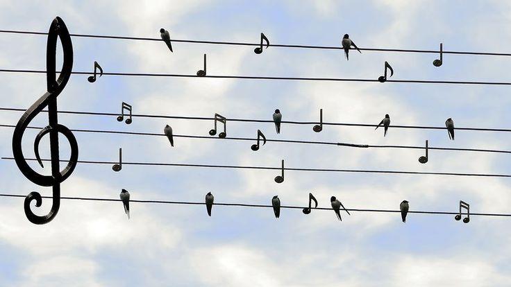 Las Aves, Los Vencejos, Cantando