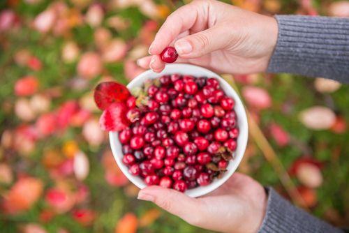 Originaire d'Amérique du Nord, la canneberge (ou cranberry) est une petite baie rouge qui appartient à la famille des myrtilles. Bien connue par les femmes sujettes aux infections urinaires, la cranberry possède de nombreuses autres vertus pour la santé qu'il serait dommage d'ignorer. C'est tout…