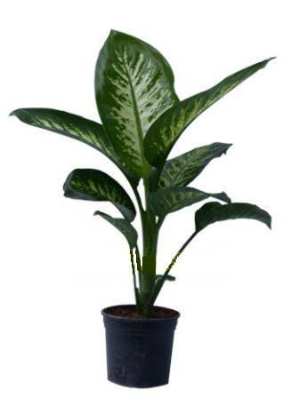 123 Best Indoor Plants Oh My Images On Pinterest