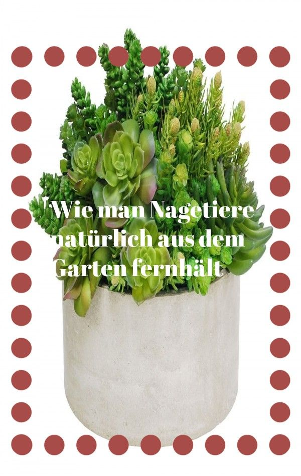 Tipps Und Pflanzenlisten Fur Den Besten Schattengarten Auf Dem Block Garten In 2020 Plants Planter Pots Herbs