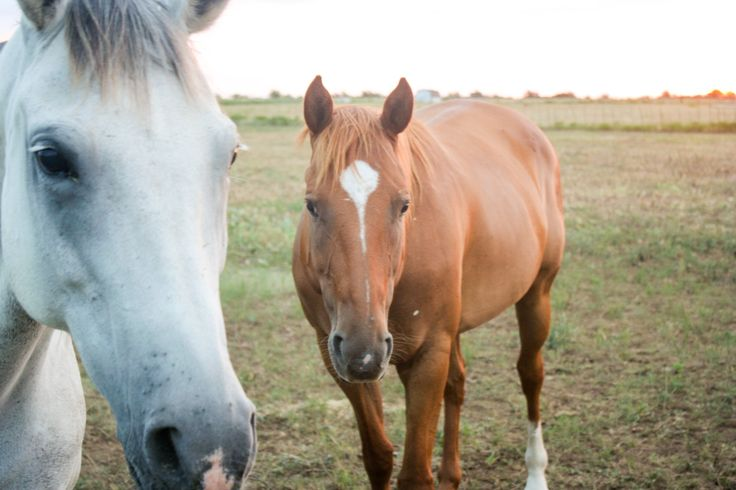 Equine Photography by Sarah Mitchell