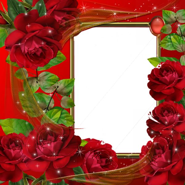 Beautiful Red Roses Transparent Photo Frame