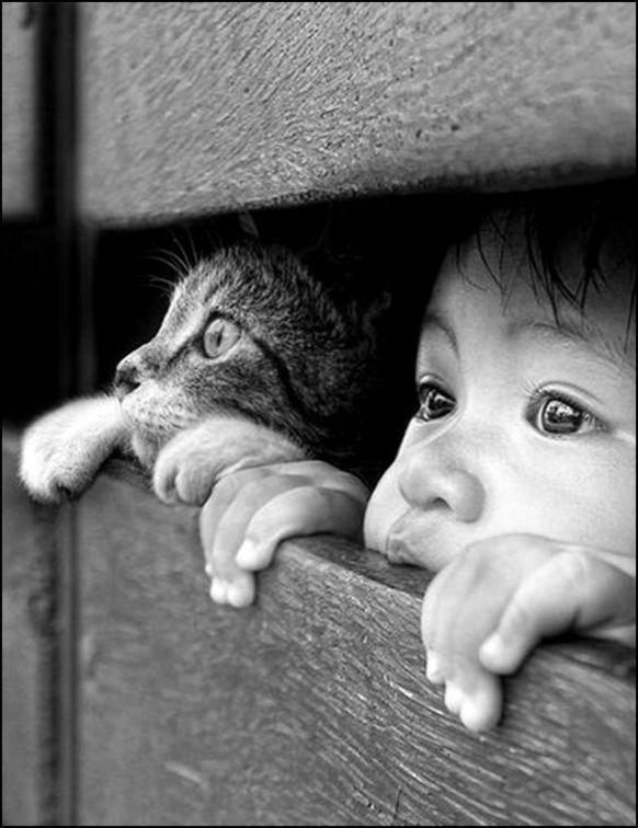 Katze schaut mit Kind aus Verschlag