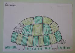 graphisme sur la carapace de la tortue