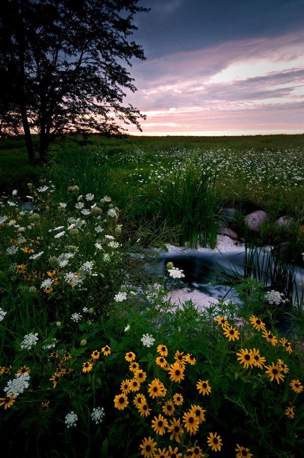 Springbrook Prairie Forest Preserve - Naperville - Illinois - USA  (von baldwinm16)