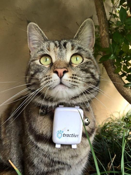 Tractive Cat You Can Use Our Tractive GPS Tracker Also For Your - Gps trackers reveal the crazy distance our cats walk when they go out at night