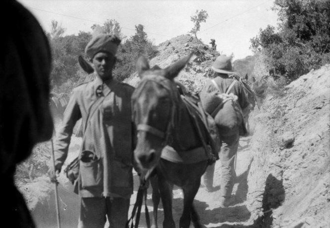 Indian man with mule, Gallipoli, Turkey, 1915. Photograph taken by Ernest Northcroft Merrington. Indian man with mule, Gallipoli, Turkey. Negatives taken by Rev Ernest Northcroft Merrington, all relating to World War 1, chiefly Gallipoli. Ref: 1/2-077970-F. Alexander Turnbull Library, Wellington, New Zealand. http://natlib.govt.nz/records/23152222