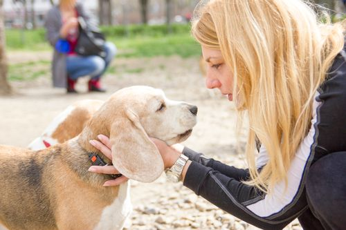 Gaining Insight to Our Dogs' Health through a Pet Psychic