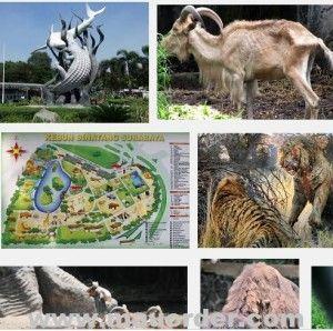 gambar kebun binatang surabaya