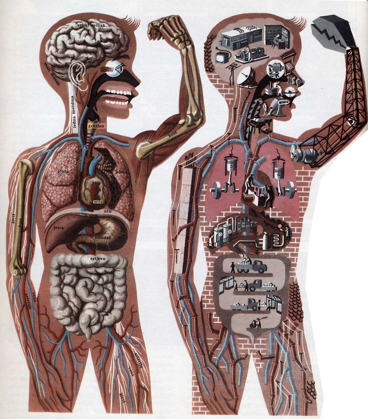 'Body as Machine' - Illustration from Children's encyclopedia first published in Yugoslavia in 1960.