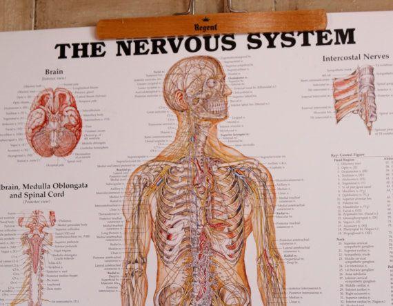 Best Antique Medical Collection Images On   Med School