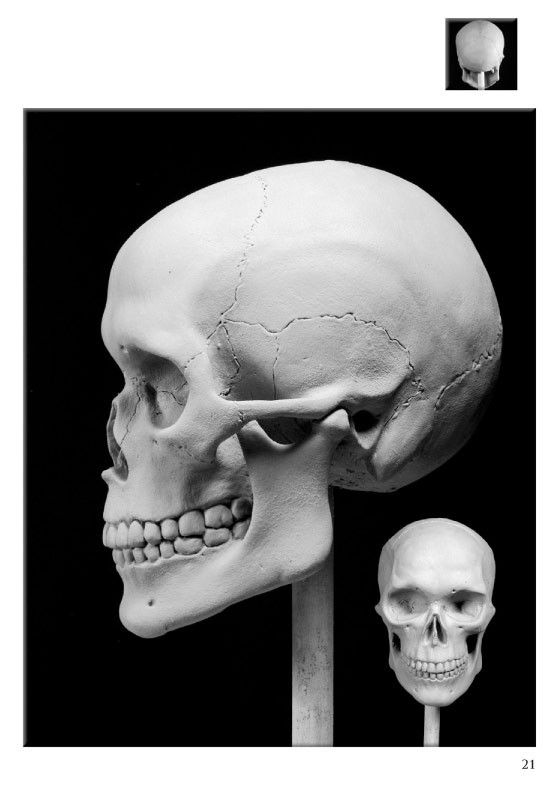 Excerpt on how to sculpt a skull from Portrait Sculpting: Anatomy & Expressions in Clay by Philippe Faraut