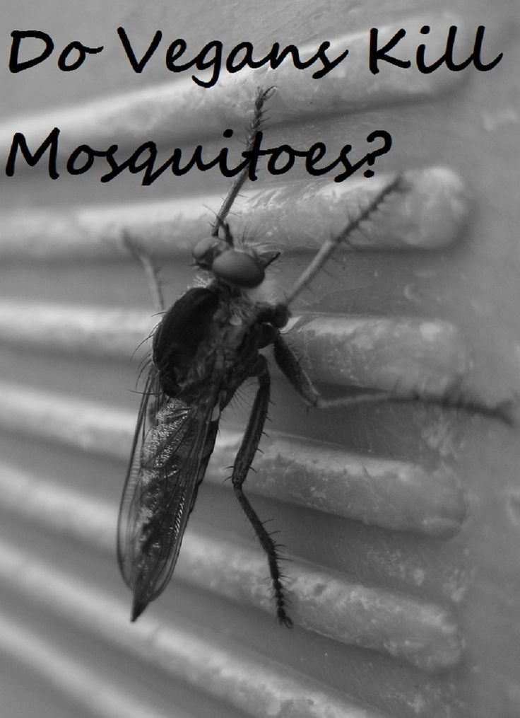 """I assume that vegans allow the mosquitoes to bite them, they ignore the urge to slaughter their disgusting little bodies. They think """"oh, look at their cute little faces, adorable."""" It doesn't hurt..."""