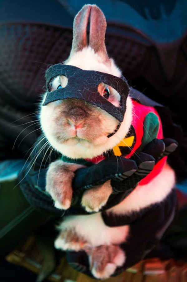 50 absolute best pet costumes of all time: Rob-Bun