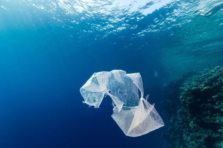 Background and Solution: Plastic is a substance the Earth cannot digest.   REFUSE SINGLE-USE PLASTIC