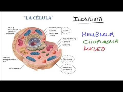 estructura cloroplasto yahoo dating