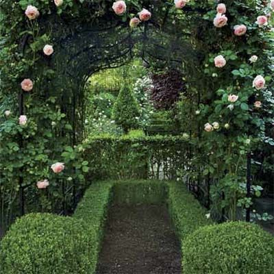 roses and boxwood