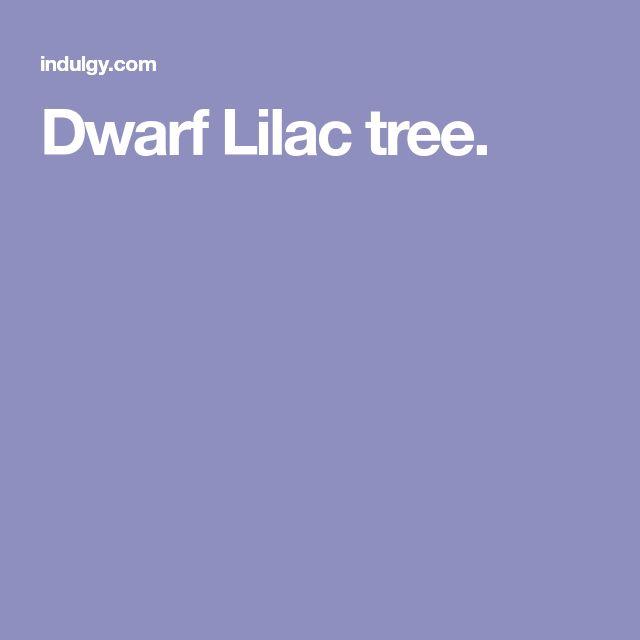 Dwarf Lilac tree.