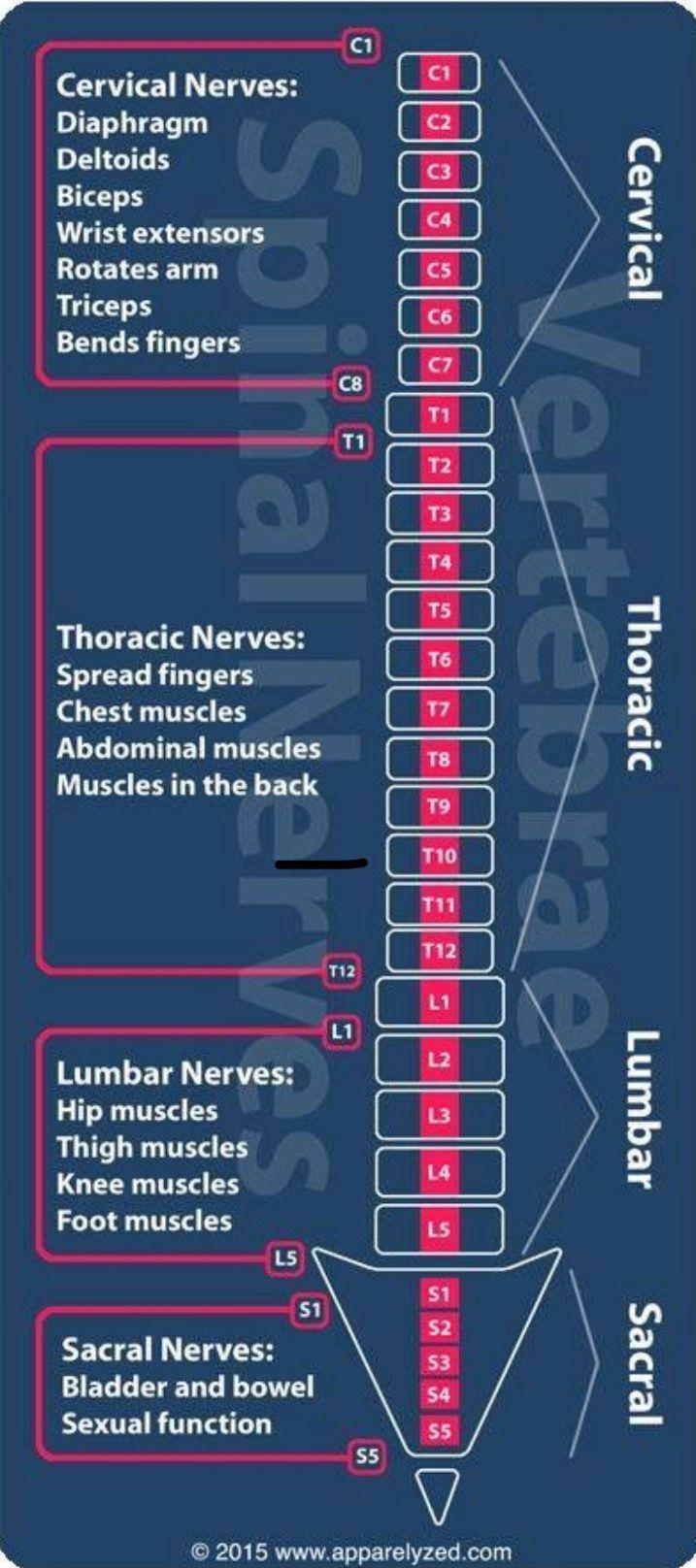 Pin De 80s Vintage En Anatomia Anatomia Y Fisiologia Humana