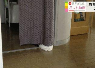 Hidey-cat...