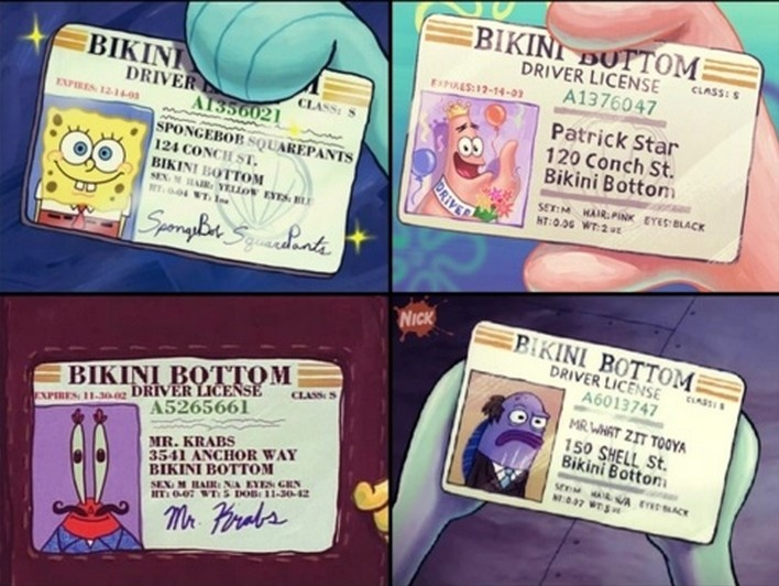 spongebob drivers license- WAIT WHAT THE HECK  WHY DOES SPONGEBOB HAVE ONE!!?!???