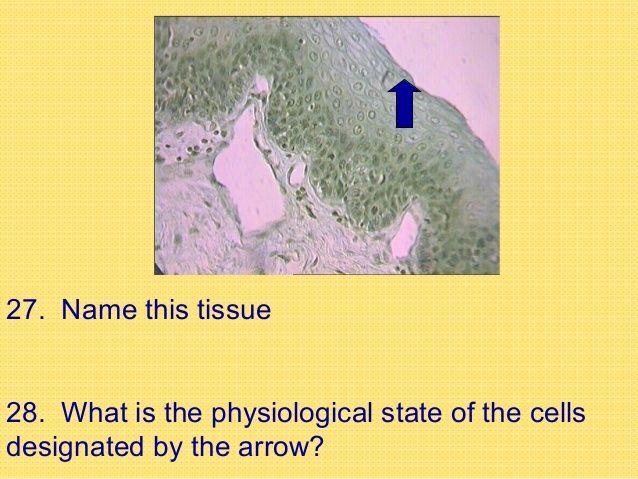 Histology Quiz Quiz Nursing Students Student