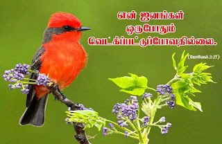 Download HD New Year 2016 Bible Verse Greetings Card & Wallpapers Free: Tamil Bible Wallpapers Free Download