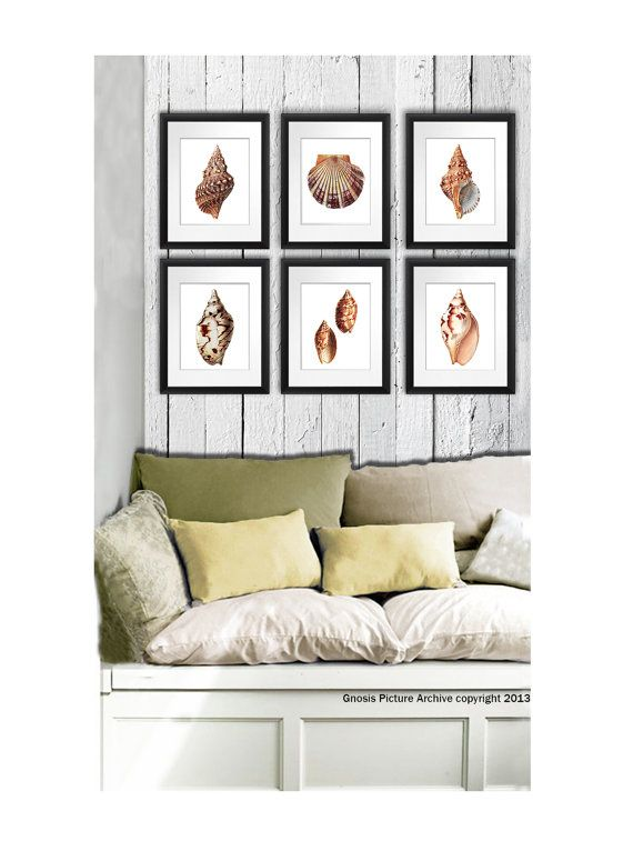Set Of 6 Seashell Wall Art Prints Beach Themed Living Room Wall Hanging  Decor Art Prints Sea Shells Conch Scallop Shells Orange Brown