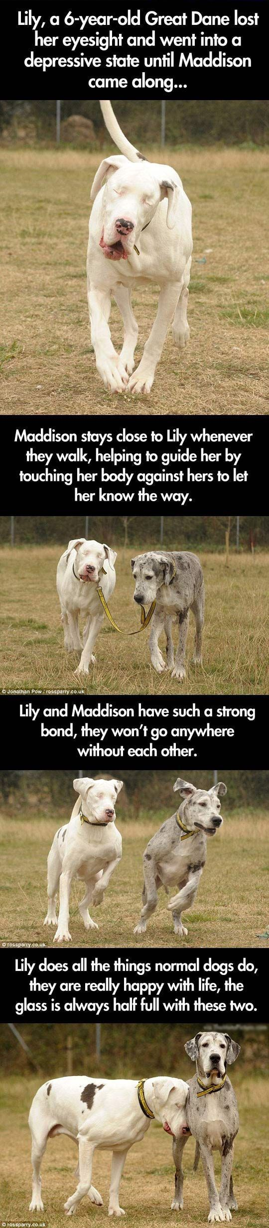 Best Sad Dog Stories Ideas On Pinterest Dog Stories - 25 heartwarming moments animals hugging