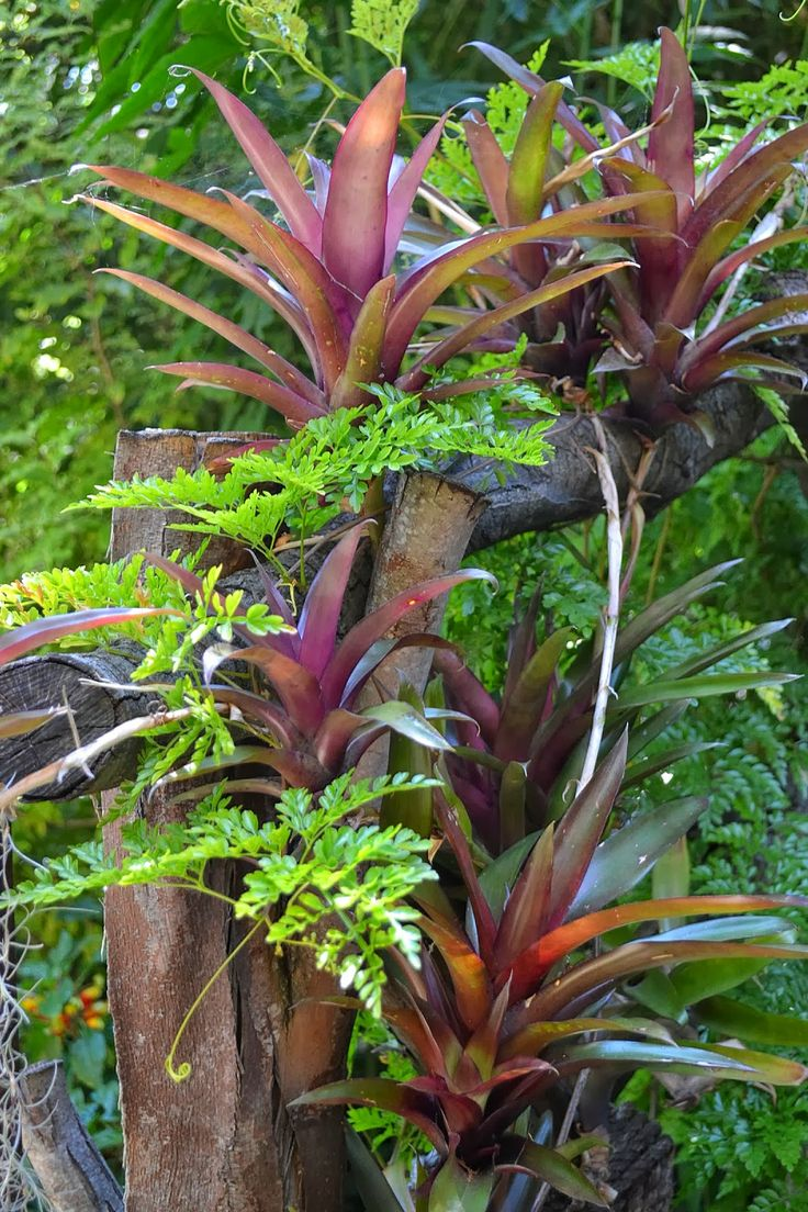 best Green wall images on Pinterest Plants Garden compost and